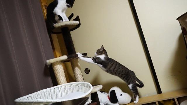 爪とぎを発見する猫