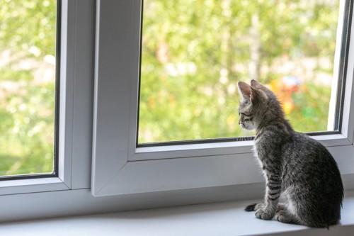 窓から外を眺めるねこ