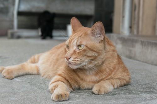 何かを見る野良猫ちゃん