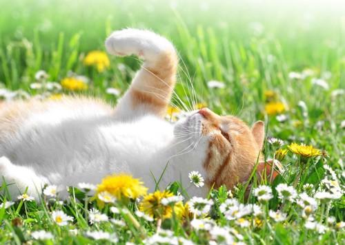 花の中に寝そべる猫