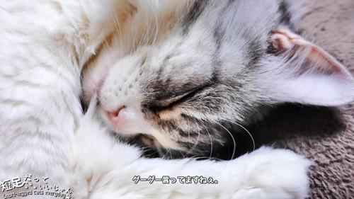 寝ている猫の顔