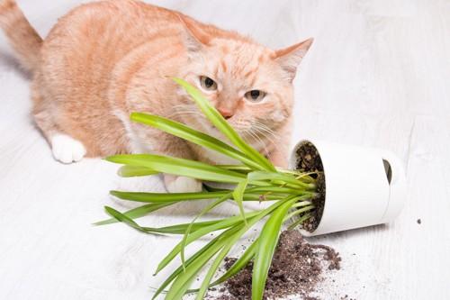 落ちた植木鉢の横にいる猫