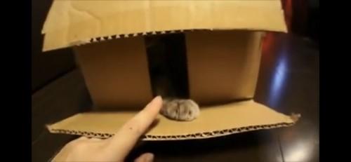 箱から猫の手