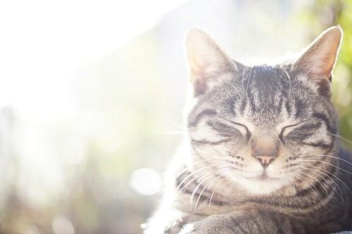 光を浴びる猫
