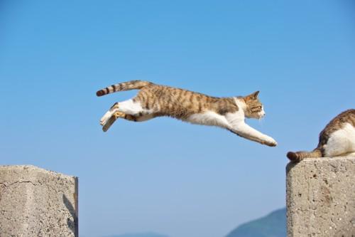 ジャンプする茶白の猫