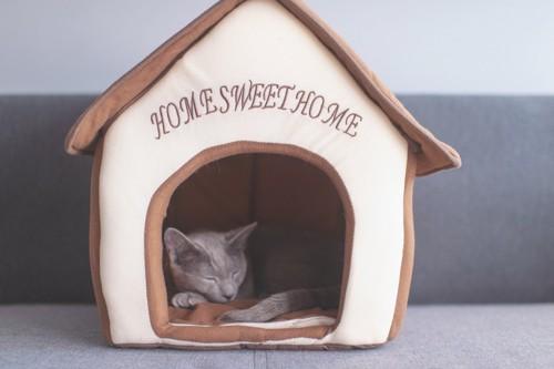 ハウスで眠る猫