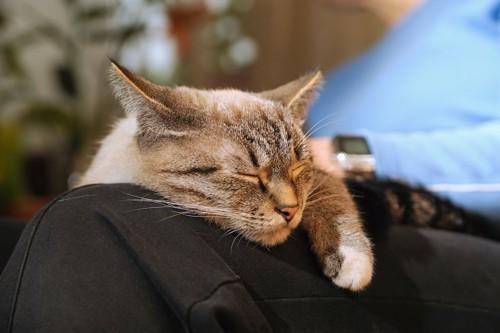 飼い主の膝の上で眠っている猫