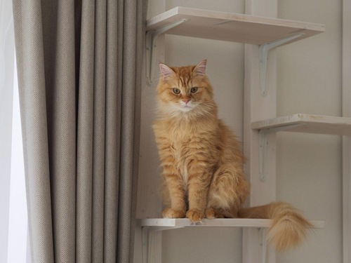 キャットステップに座る猫