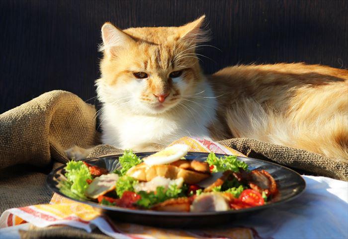 サラダを見ている猫