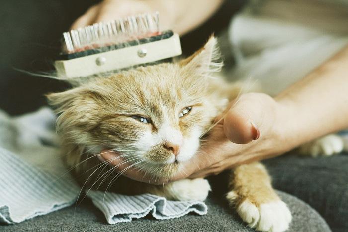 ブラッシングしている猫
