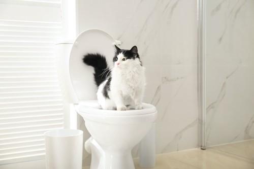 人用のトイレに座っている猫