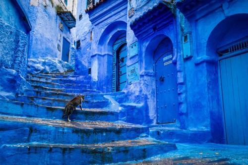 モロッコの猫