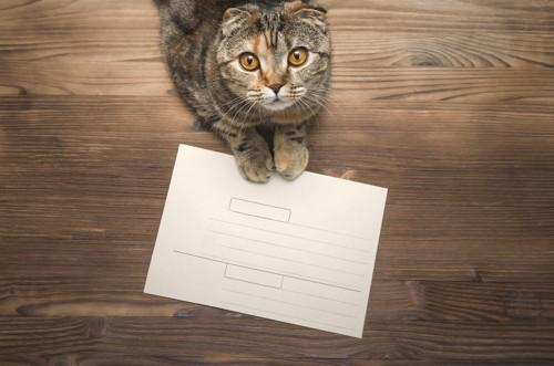 猫からのメッセージ
