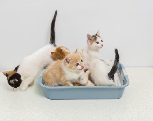 1つのトイレに多数の猫