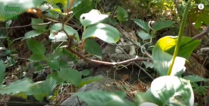 茂みからとび出す子猫