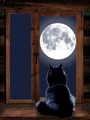 黒猫の後ろ姿