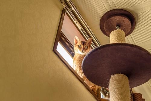 キャットタワーから窓に登った猫