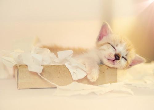 ティッシュ箱の中で眠る子猫