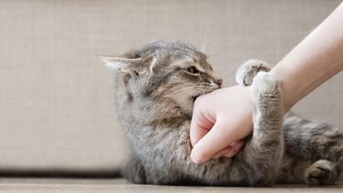 腕に噛みつく猫