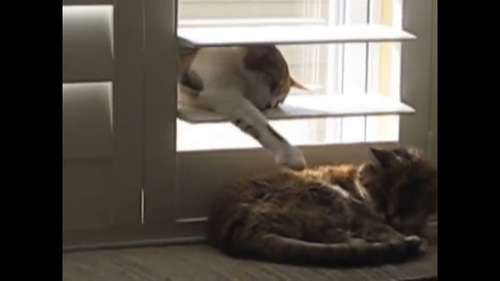 ちょっかいをかける猫