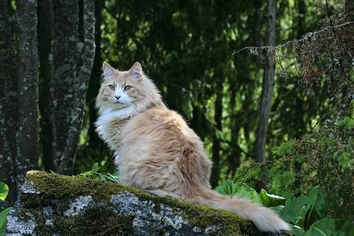 森の木の上に座っている猫