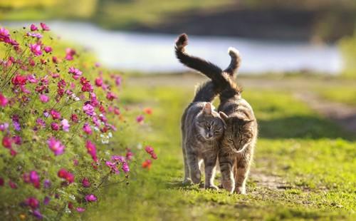 自然の中の二匹の猫