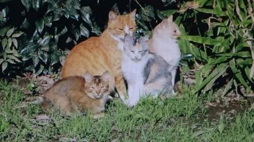 野良猫時代の姉妹