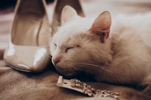 ピアスと猫