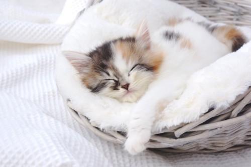 カゴのベッドの中で眠っている三毛柄の子猫