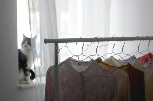 室内にハンガーで干された洋服と窓辺に座る猫