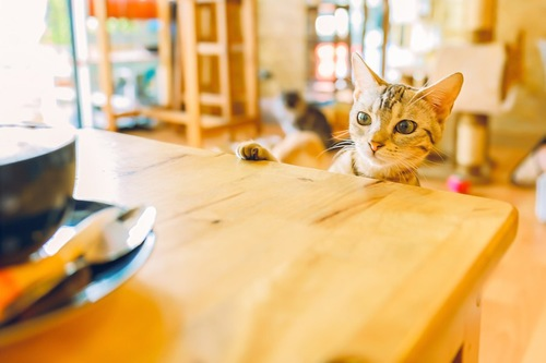 カップがのったテーブルをのぞく猫