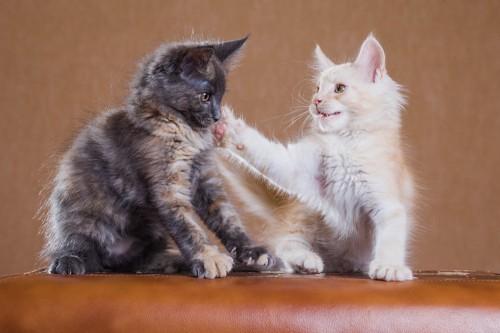 子猫に叱られている子猫