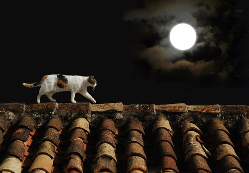 月明かりの下で家の屋根を歩く猫