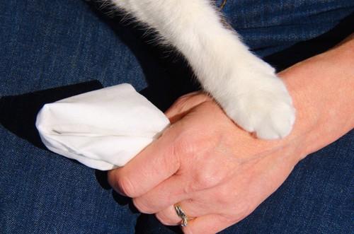 ハンカチを持つ人の手と猫の手