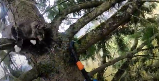 木の上で動き回る猫