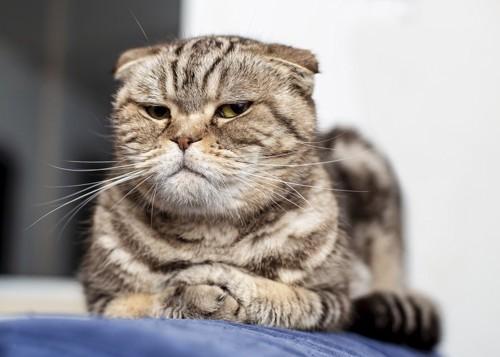 こちらを軽蔑のまなざしで見る猫