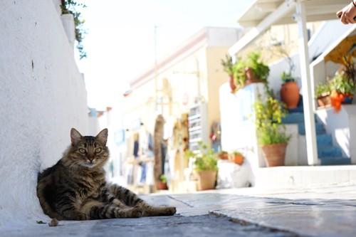 人の住むそばの道でくつろぐ猫