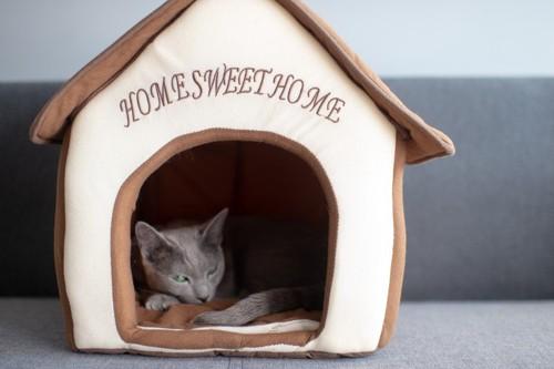 ハウスに寝る猫