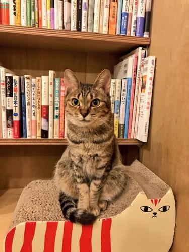 本と猫ちゃん