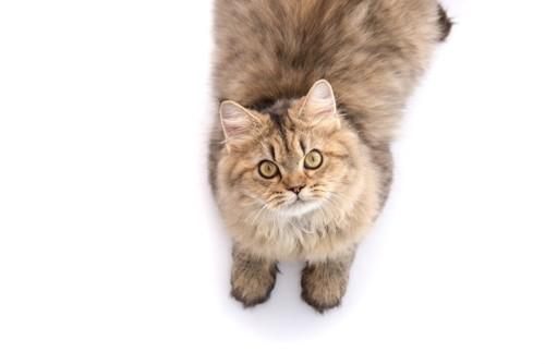 近寄るなと訴える猫