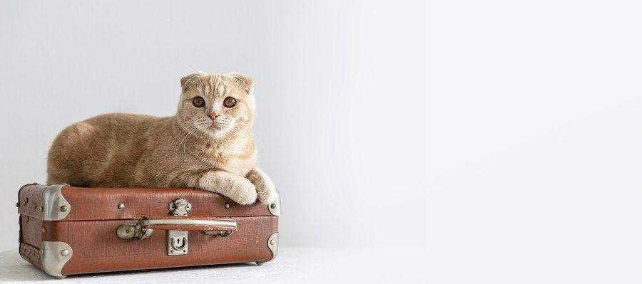 カバンに乗った猫