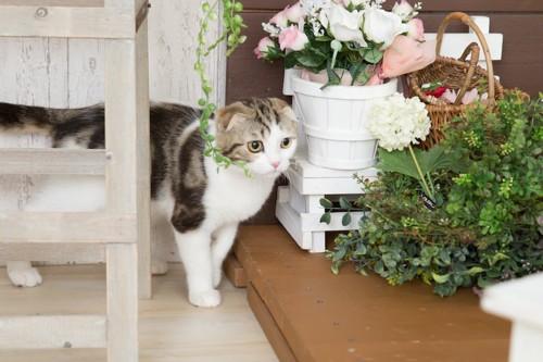 部屋に飾られた花と歩く猫