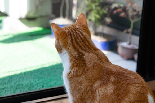窓を見つめる猫の後ろ姿