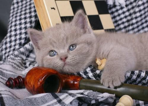 パイプの横で寛ぐ子猫
