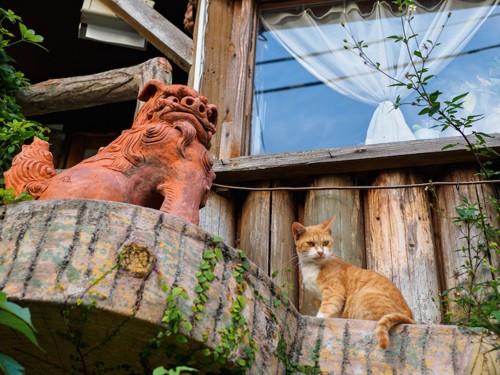 シーサーの隣に座る猫
