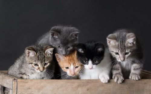 色々な模様の子猫たち