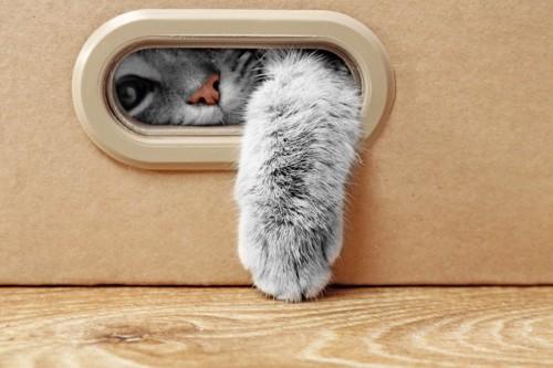 穴から手と顔を出す猫