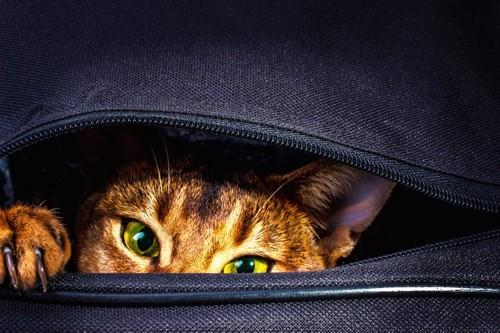ルートートのバックから顔を出す猫アップ