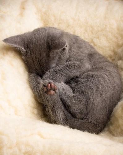 かわいい寝相で眠る子猫