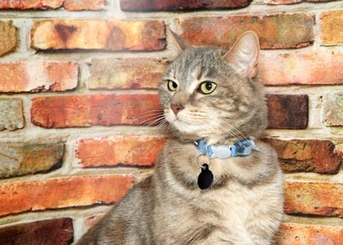 凛々しい表情の猫と姓名判断のための名札